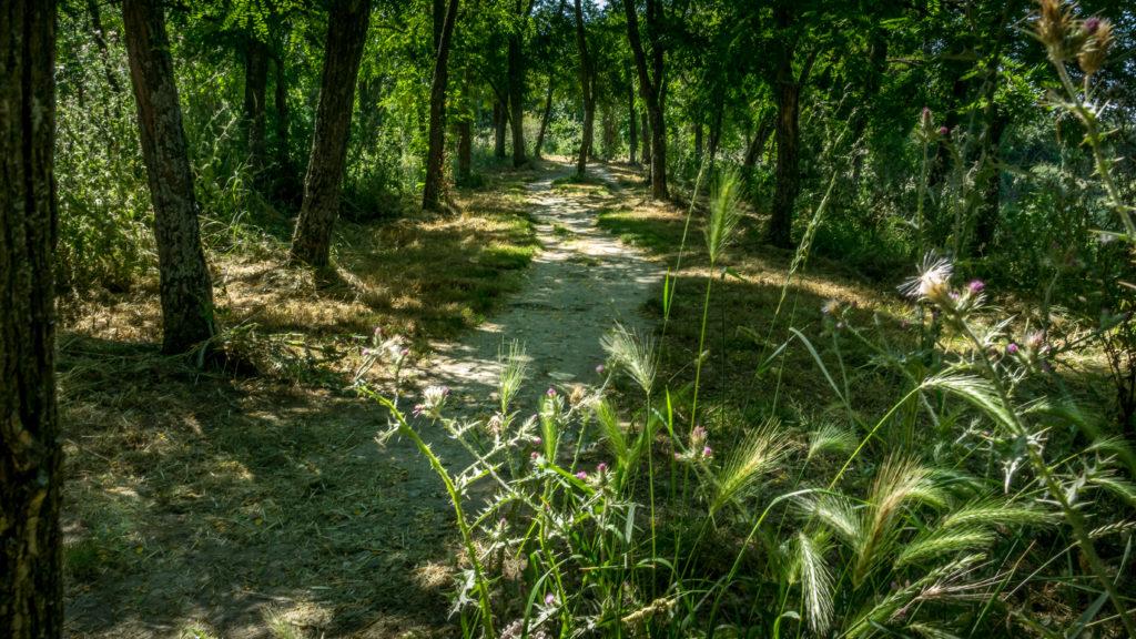 Lafourguette - Sentier du parc de Gironis